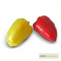 Продам семена сладкого перца Yanika F1 / Яника F1 фирмы Китано