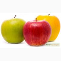 Продам элитные саженцы яблони