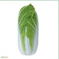 Продам семена пекинской капусты KS 374 F1 (Китано)