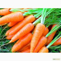 Продам свежую морковь
