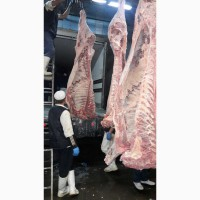 Продажа КРС Крупного Рогатого Скота, Быки