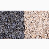 Линия для очистки, шелушения и сепарации семян подсолнечника ТFKH-1500