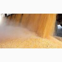 Кукуруза - прямые ЖД поставки в Азебайджан