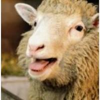 Продам овец и также баранов