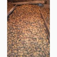 Продам картофель кедабек село Новоивановка