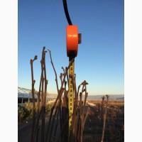 Саженцы новых, перспективных сортов фундука (Corylus maxima L)