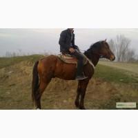 At satılır temiz qarabaq atıdı yarışa yarıyır at danıyan adamlar görse