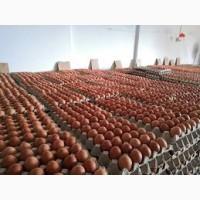 Продам инкубационное яйцо бройлера, FCA