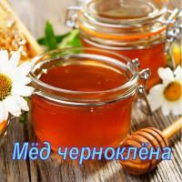 Продается мёд черноклёна класса Люкс