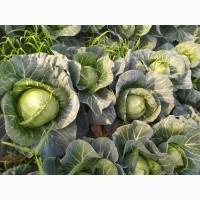 Срочно продам овощи и фрукты от Кыргызтана