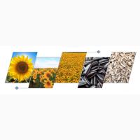 Комплексы переработки семян подсолнечника