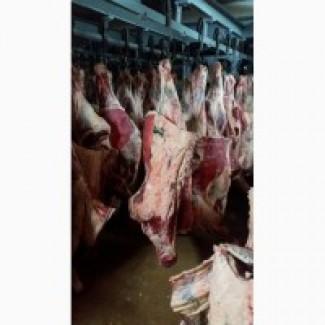 Мясо Говядины на Китай