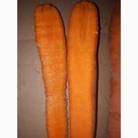 Продам морковь оптом, производства РБ