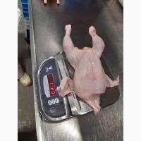 Продам курицу замороженую от компании экспортера