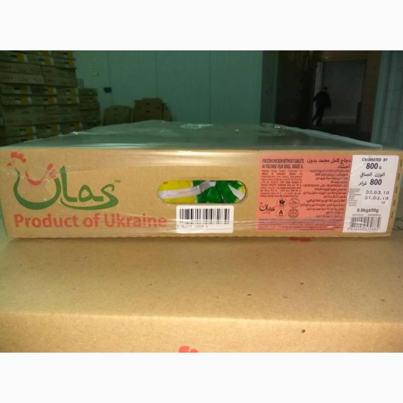 Фото 7. Продам курицу замороженую от компании экспортера