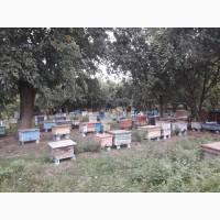 Пчелосемьи и пчелопакеты