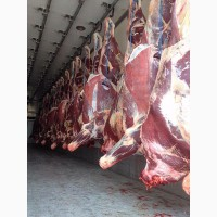 Мясо говядина, быки (заморозка)